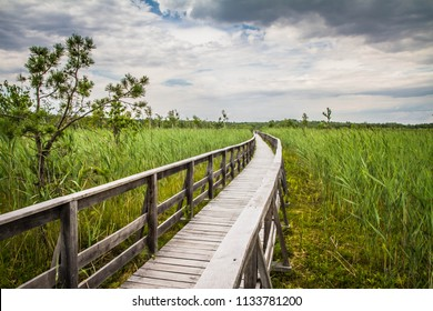 Wooden walkway leading to a lake with bulrush growing all around