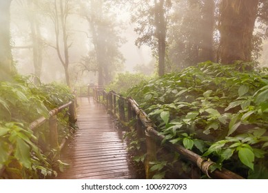 Wooden walkway nature walk on a foggy morning.Magic misty forest.Thailand