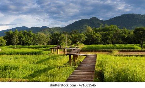 Wooden walkway over rice field with mountain background, north of Thailand