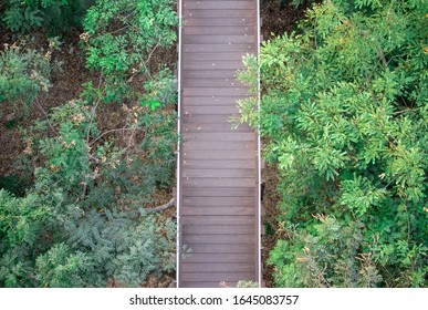 Wooden walkway path with green trees.
