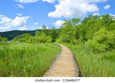 Wooden walkway in the Plitvice Lakes National Park, Croatia.