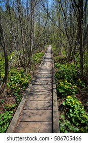 A wooden walkway runs straight through bare trees and green vegetation.