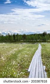 Wooden walkway to the swampy river bank