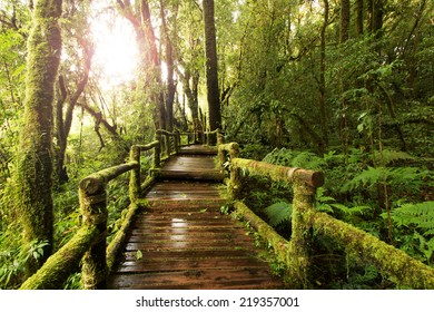 wooden walkway through in deep rain forest with morning light