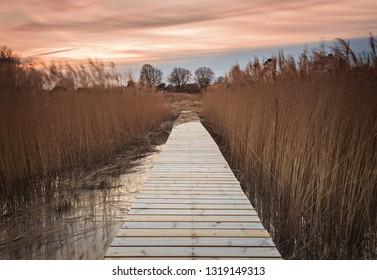 Wooden walkway through grassy reefs. Utvalinge, Sweden.