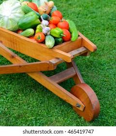 wooden wheelbarrow full with fresh vegetables in the garden.