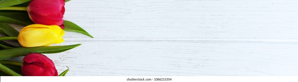 Wooden white background with tulips. Banner for website. Conception holiday, March 8, Mother's Day.