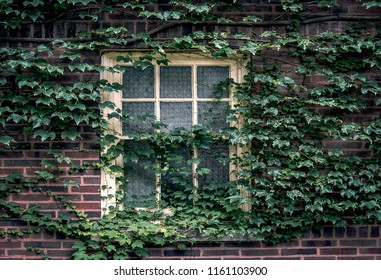 wooden window on brick building covered with ivy