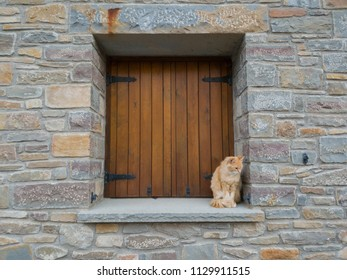 wooden window in rustic house with a cat on the cornice