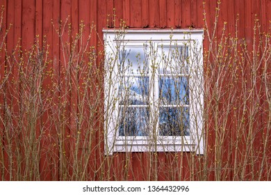 A wooden window of a typical Swedish hut with the typical Falu red. In front of the window there was a bush growing which sprouts its buds in spring.