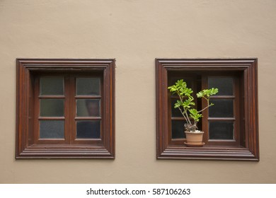 wooden windows and a flower on it