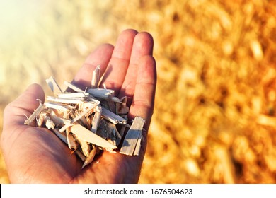 Wooden wood chips in hand biomass fuel made by nature? Renewable source of energy woodchips business industry.