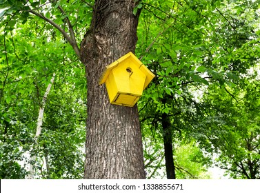 Wooden yellow birdhouse affixed to a tree trunk in summer