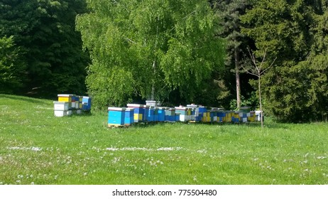 Wooden yellow and blue Bee hive , beehive in garden
