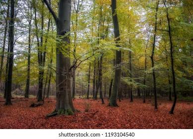 Woodland Bentheimer Wald