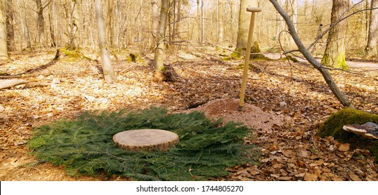 Woodland burial. Cemetery. Empty Tomb, preparation of a near-natural burial grave, forest burial. newly built grave covered with fir branches and a wood slice, tree trunk. natural burial ground.