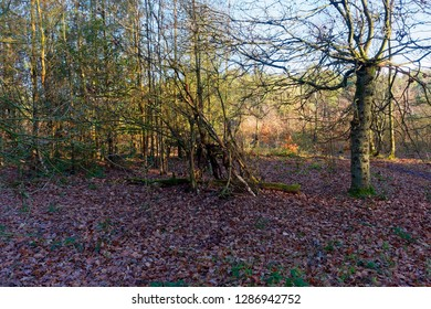 In a woodland clearing, amongst tall bare trees atand the remains of a woodland hideout.