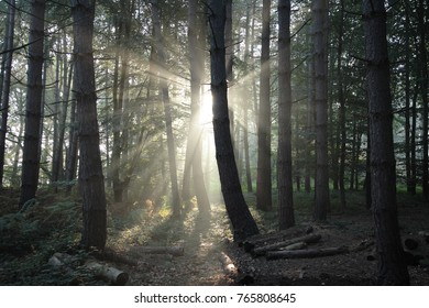 Woodland at dawn and dusk with light rays