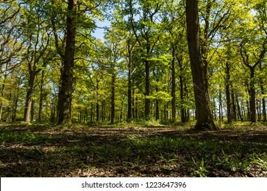 Woodland Floor in English Summer