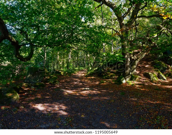 A woodland footpath winds between twisted Silver Birch and Oak trees. Rocks lay on either side of the path