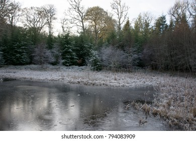 In a woodland glade is a frozen pond surrounded by trees covered in frost and the vegetation is white with a hoar frost
