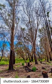Woodland at he Alcoa Wellard wetlands in Perth WA
