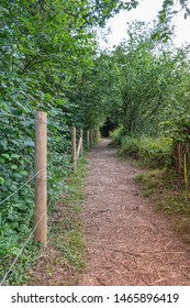 woodland path with fence to side disappearing off in the distance