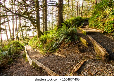Woodland path with a fork symbolic of choosing a path for the future. Fork or split in a woodland path stairs or trail