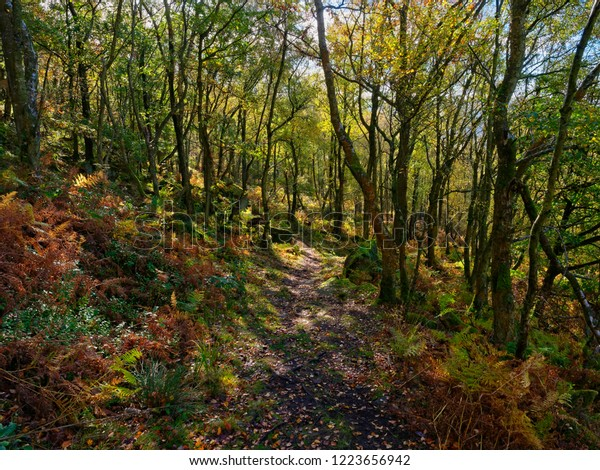 A woodland path winds downhill between tall trees and gritstone rocks