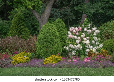 Woodland perennial flower garden with pink and white hydrangea, arborvitae, coleus, dianthus, and other plants with grass lawn in front