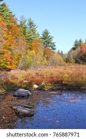 A woodland pond surrounded by brilliant autumn foliage