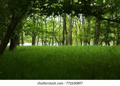 Woodland River Forest