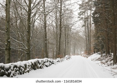 Woodland road in winter