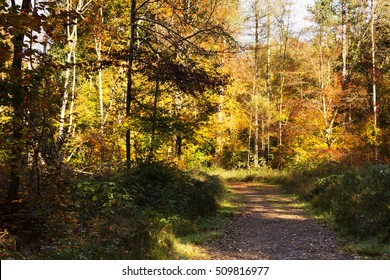 Woodland scene with autumn leaves in yellow and brown