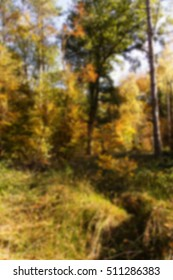 Woodland scene with autumn leaves in yellow and brown Out of focus.