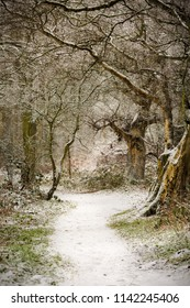 Woodland scenery and path through trees in winter snow scene