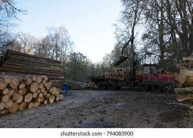 In a woodland setting there's a machine lifting tree logs from a trailer onto a stack of logged trees and surrounded by further stacks of trees