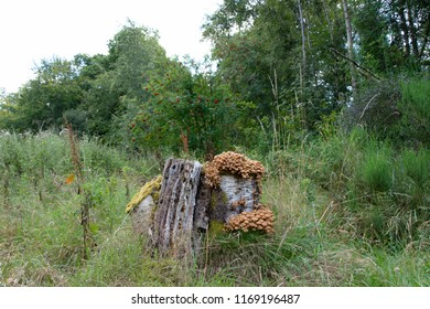 In a woodland setting is a tree stump with is covered in fungi