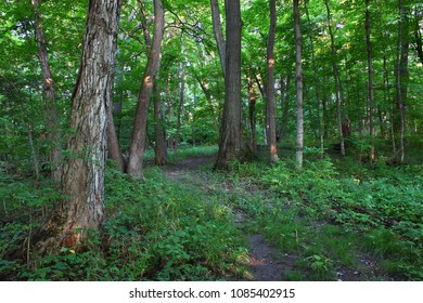 Woodland at Shabbona Lake State Park in northern Illinois