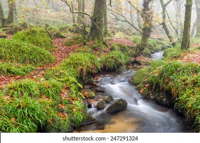 A woodland stream babbling over rocks at Golitha Falls on the edge of Bodmin Moor in Cornwall