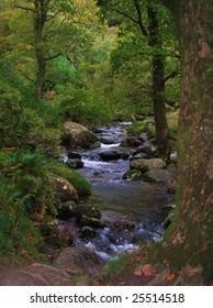 Woodland stream in Ireland