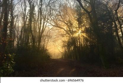Woodland Sunrise - Owlbeech Woods, Horsham