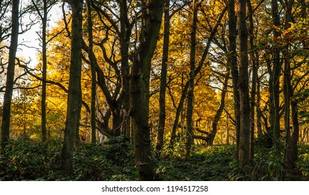 Woodland trees display autumn colours on Wimbledon Common in south west London.