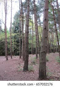 Woodland trees in the English countryside country park