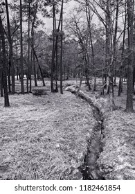 The Woodlands, TX USA - Feb 20, 2018  -  Stream in Woods in The Woodlands TX in B&W