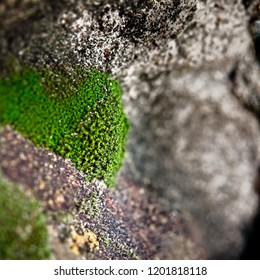 The Woodlands TX USA - Feb. 20, 2018  -  Green Moss on Rock 1
