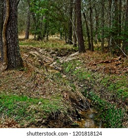 The Woodlands, TX USA - Feb 20, 2018  -  Stream in Woods in The Woodlands TX 2