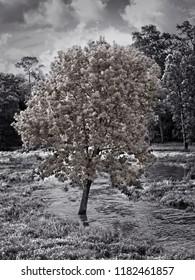 The Woodlands TX USA - Jul. 13, 2018  -  Tree in Running Stream in B&W