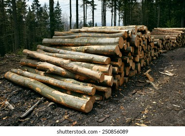 A woodpile of chopped lumber in the forest