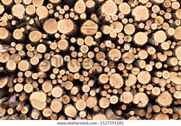 woodpile-fresh-cuts-tree-small-600w-1527